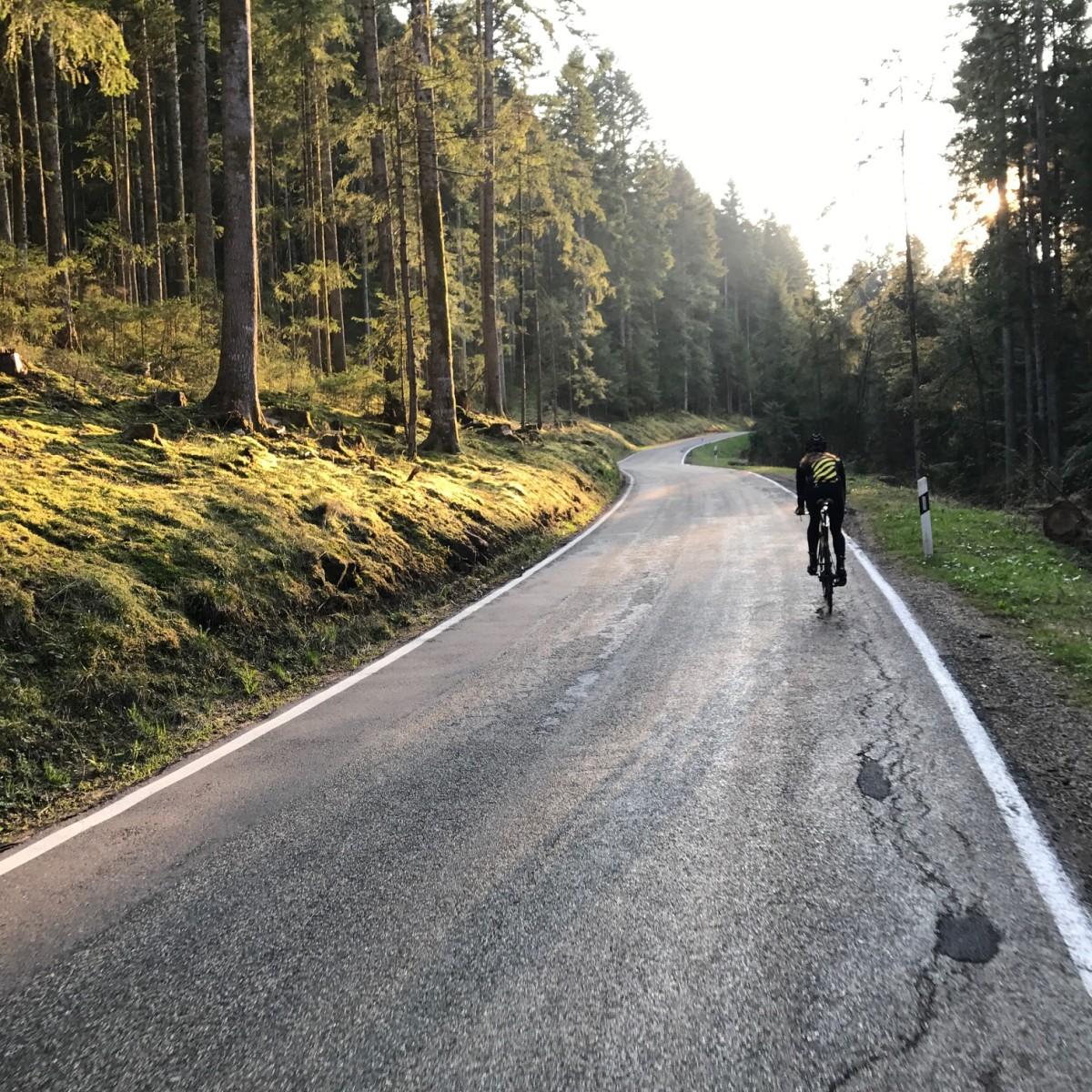 Schwarzwald - Foto: Laura Zimmermann