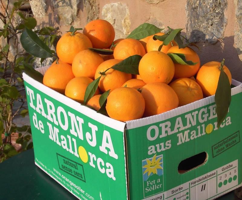 Orangen von Fet a Sóller